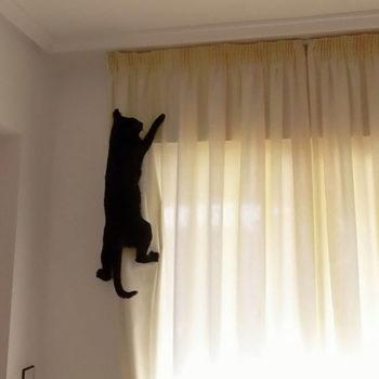 шторы и коты