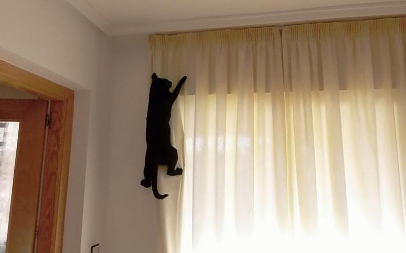 Как отучить кота лазить по шторам