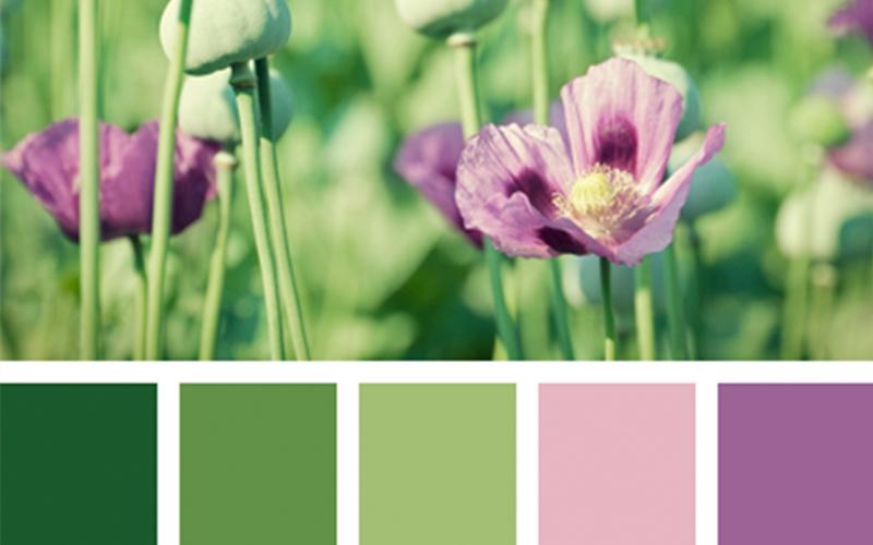 Цветовая гамма в интерьере при выборе штор