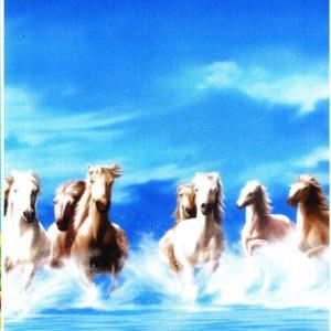 ролл-шторы лошади